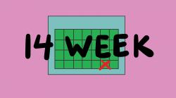 14week copy